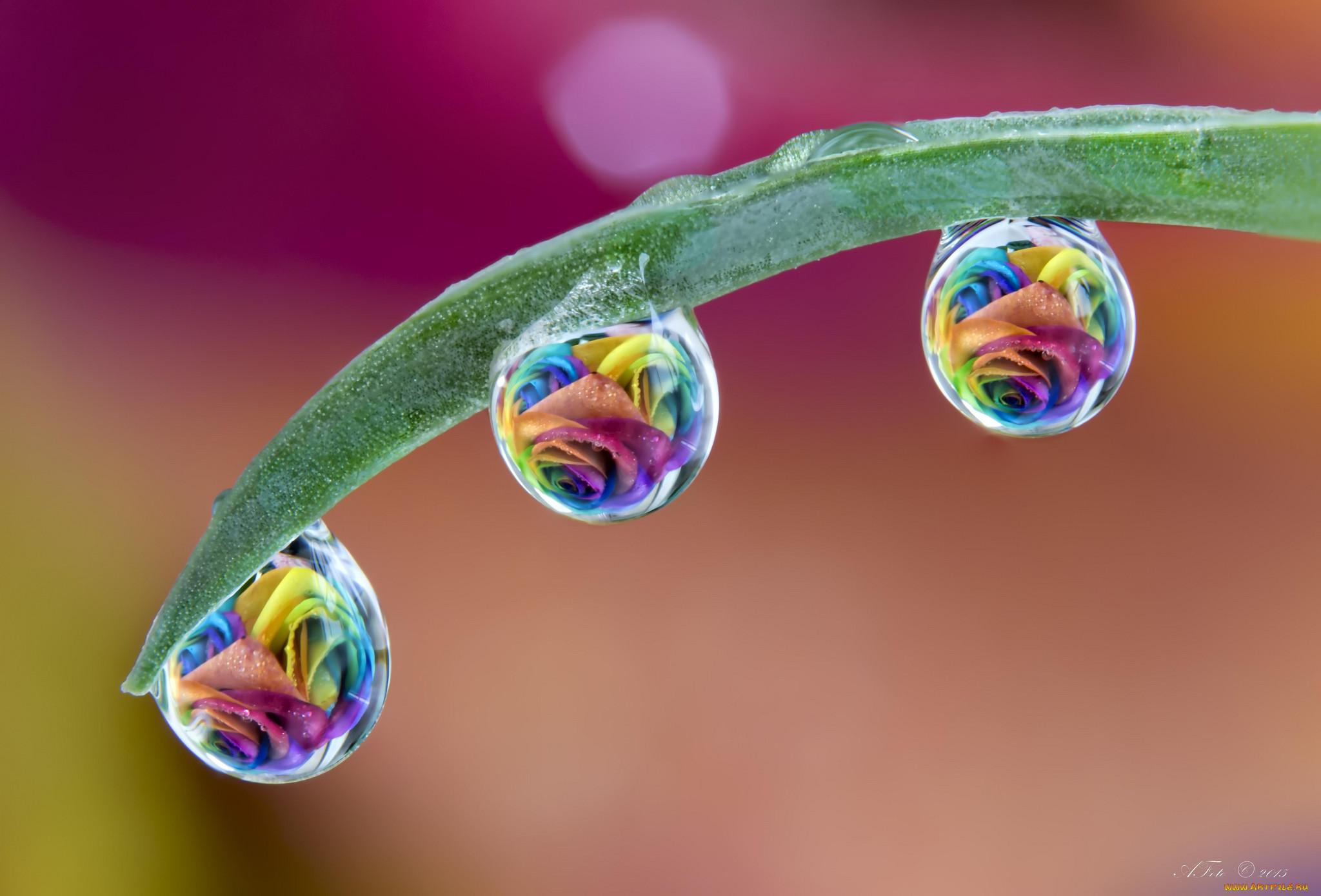 Красивые фото макросъемки воды менее есть